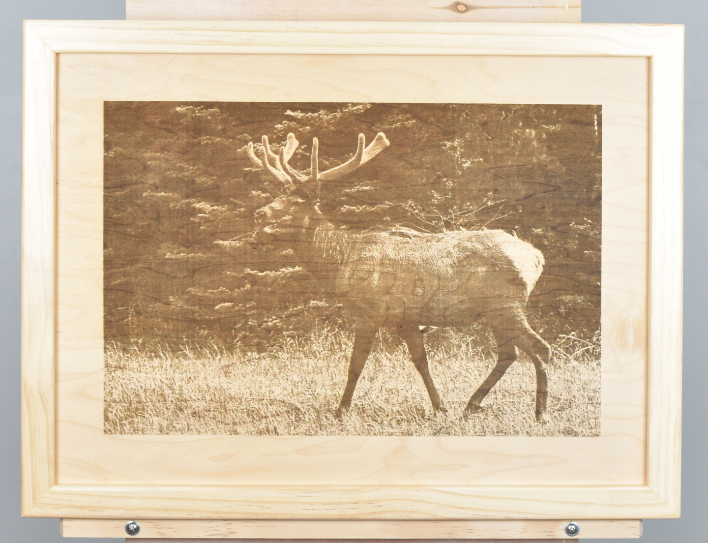 A wood burning (digital pyrograph) of an 8-pointed bull elk grazing in a meadow before a stand of pine trees. Photograph by Brigitte Werner.