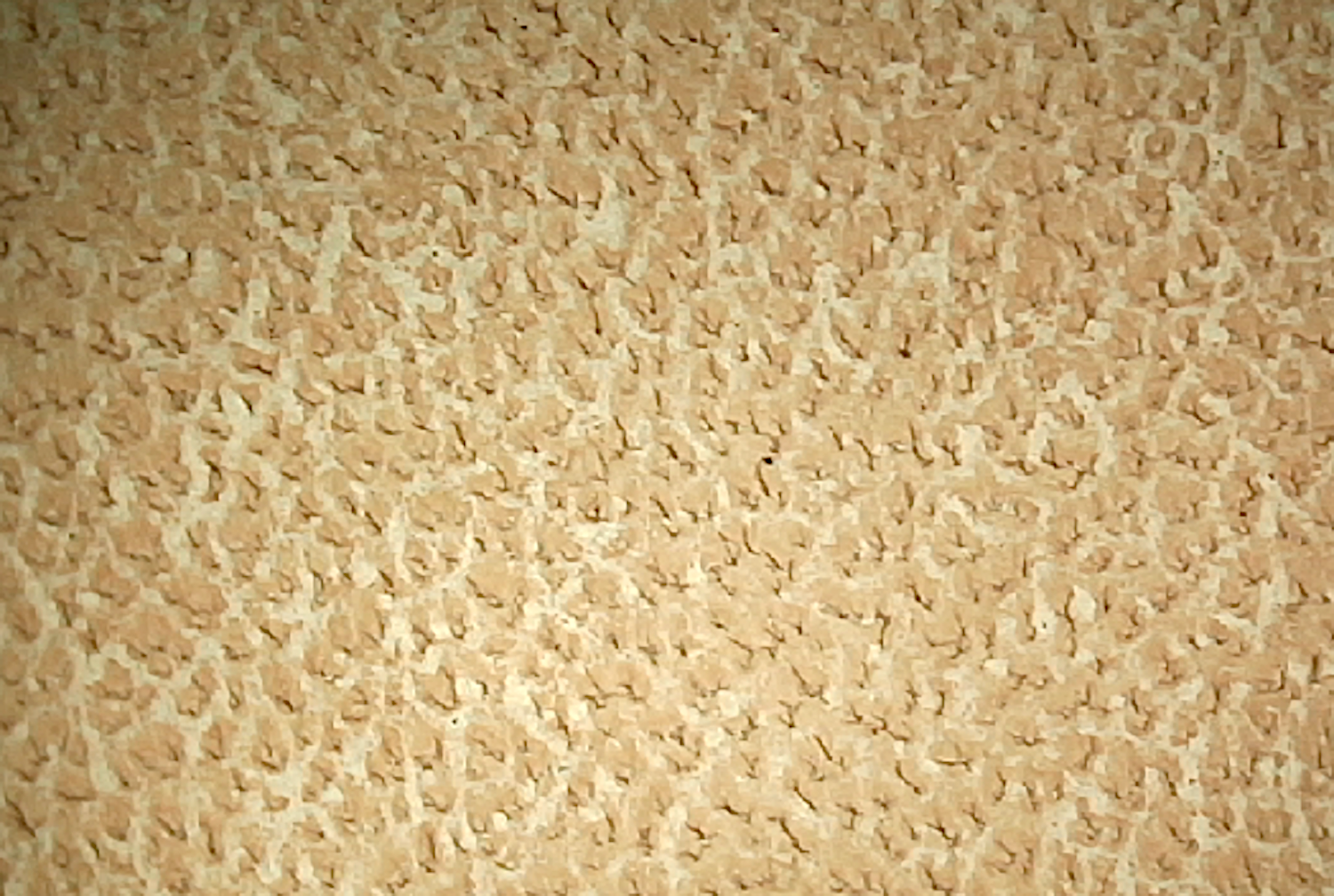 Vegetable tanned cow hide showing grain.